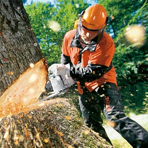 Man cutting down a tree with chainsaw
